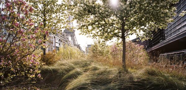 Le jardin d et du mus e du quai branly mademoiselle bon for Jardin quai branly