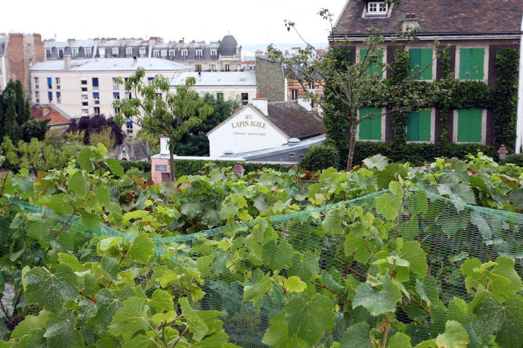 Lapin Agile et vignes du clos Montmartre (1)