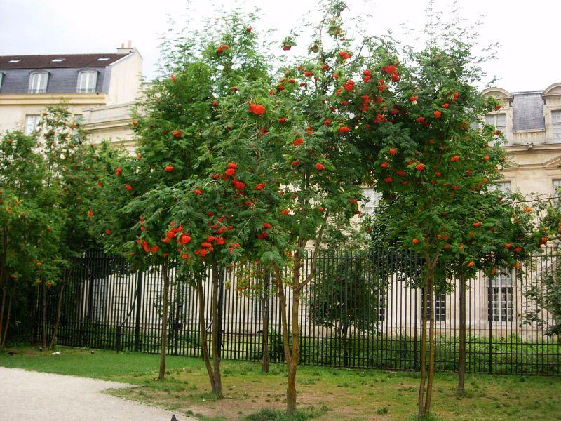 Balade Paris jardin Anne Frank - DR Melle Bon Plan