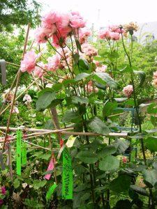 Jardin partagé Anne Frank - DR Melle Bon Plan