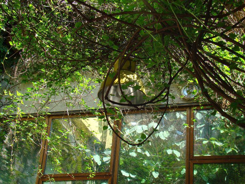 Jardin endémique Le Comptoir Général - DR Melle Bon Plan