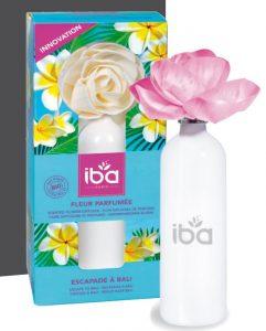 Iba fleur parfumée Escapade à Bali