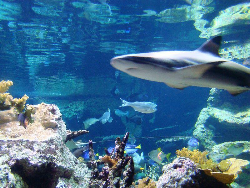 Aquariums Cité de la Mer Cherbourg - DR Melle Bon Plan