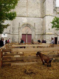 Fête de la Moisson 2014 Provins - DR Melle Bon Plan