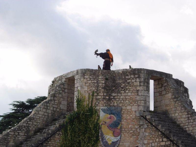 Aigles des Remparts Provins - DR Melle Bon Plan