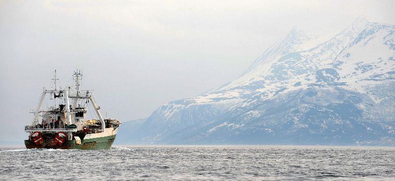 Grande Hermine aux pieds des îles Lofoten en mer de Norvège © Marcel Mochet