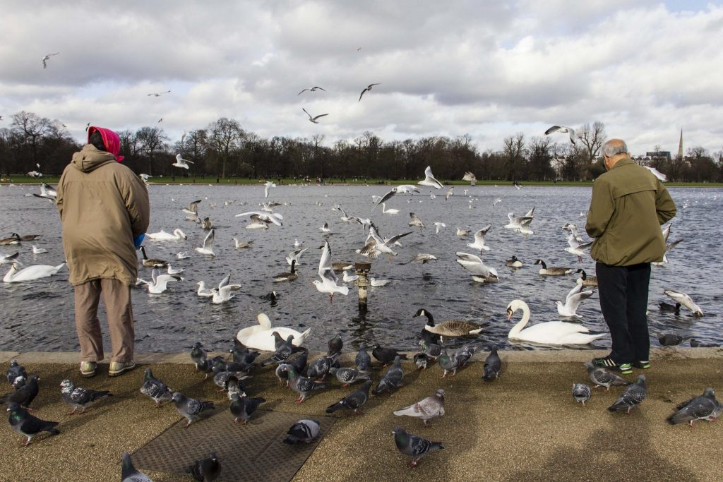 Hyde Park Londres - DR Nicolas Diolez 2016