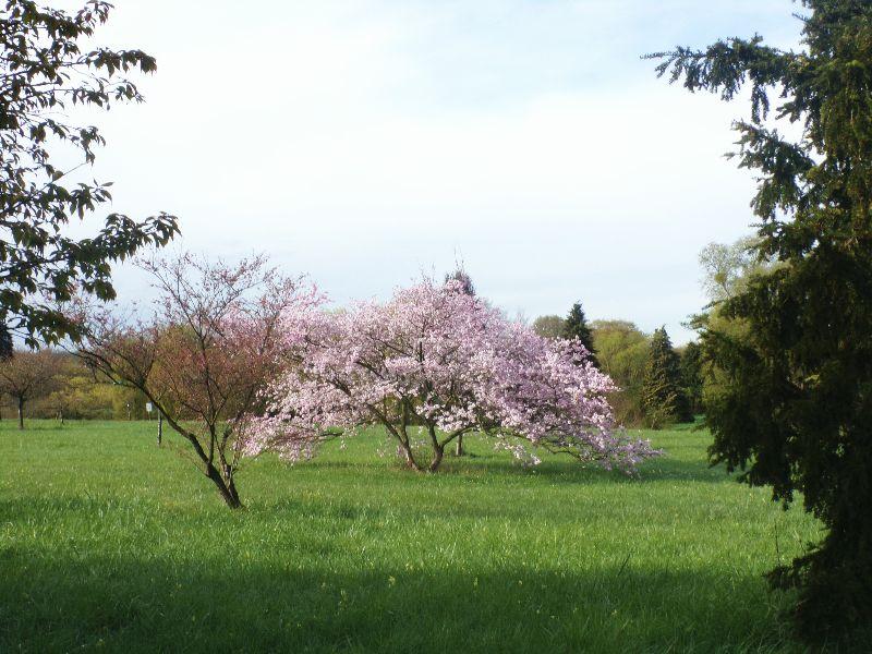 arboretum et serres de Chévreloup - DR Melle Bon Plan