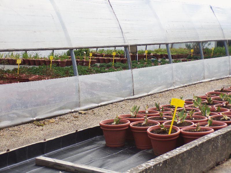 arboretum et serres de Chévreloup - DR Melle Bon Plan 2016