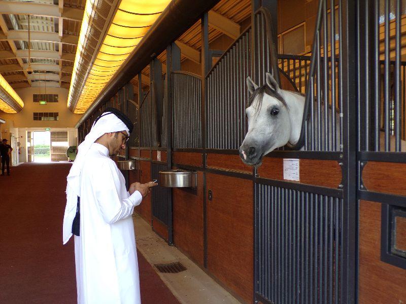 Al Shaqab Qatar - DR Melle Bon Plan 2016