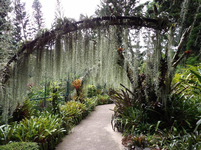 Jardin Botanique Singapour - DR Melle Bon Plan 2016