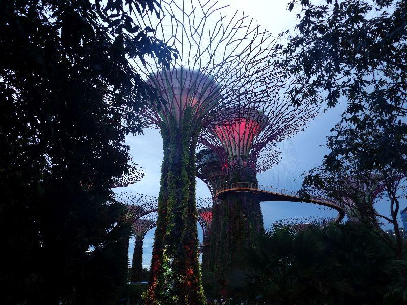 Garden's by the Bay Singapour - DR Melle Bon Plan 2016