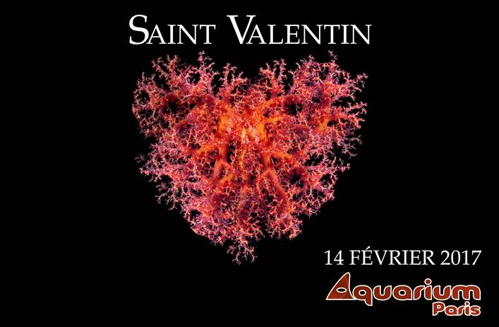 Saint Valentin Aquarium de Paris