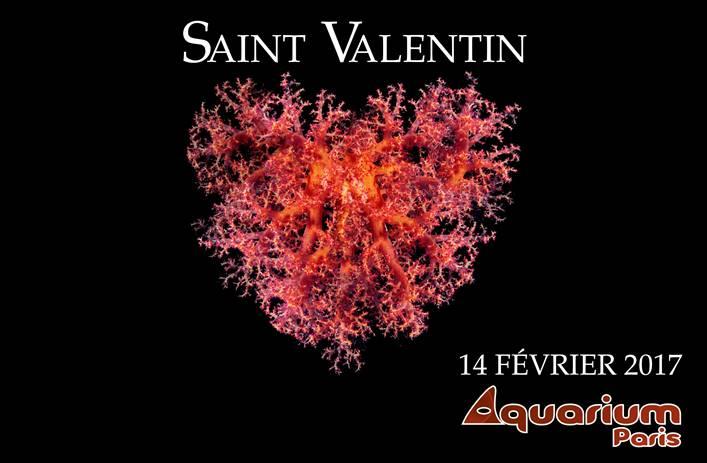Saint Valentin Aquarium de Paris