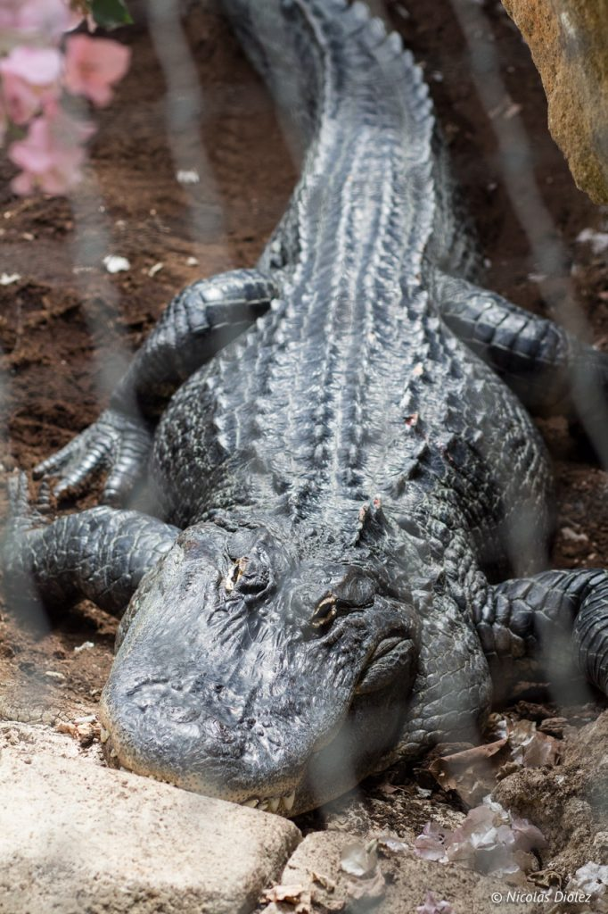 Planete des crocodiles La Vienne 86 - DR Nicolas Diolez 2017