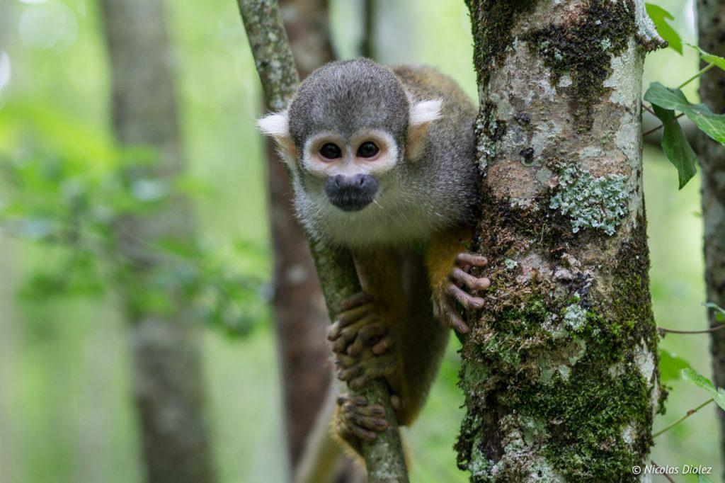 La vallée des singes La Vienne 86 - DR Nicolas Diolez 2017