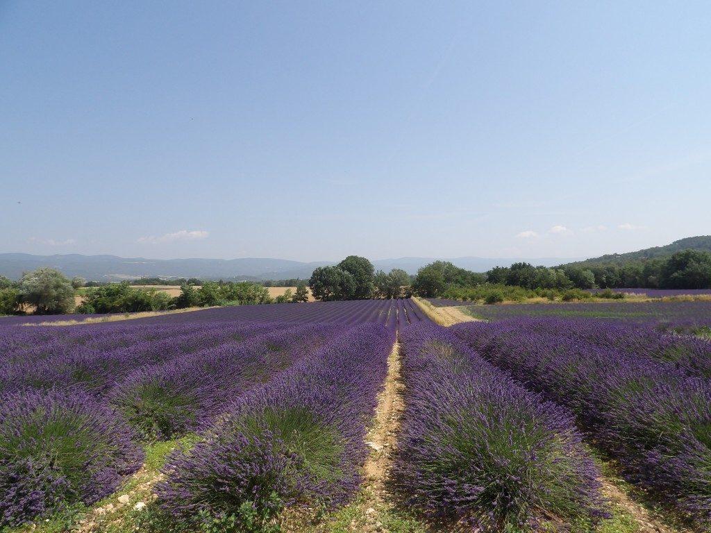 Lavande Provence - DR Melle Bon Plan 2017
