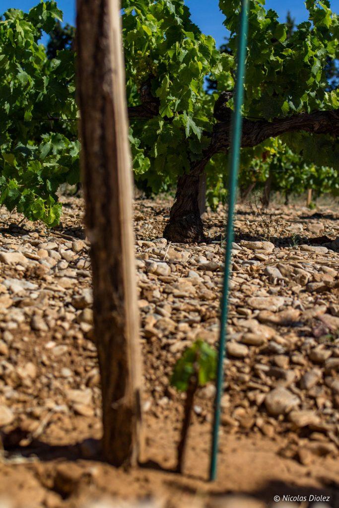 Vignes Vacqueyras - DR Nicolas Diolez 2017
