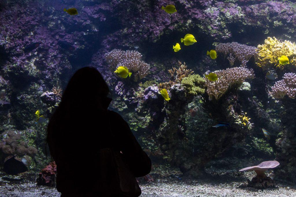 Aquarium La Rochelle - DR Nicolas Diolez 2017