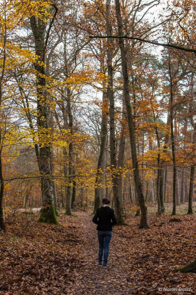 Forêt de Fontainebleau Barbizon - DR Nicolas Diolez 2017