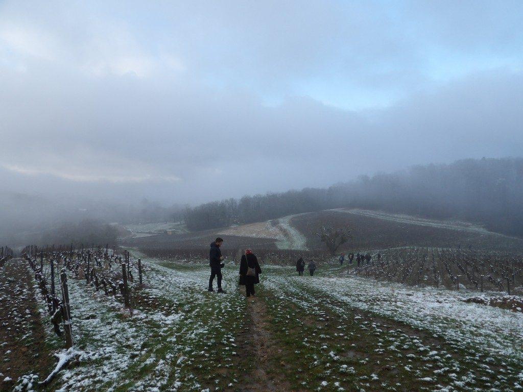 Vignes l'Etoile Percée du Vin Jaune Jura