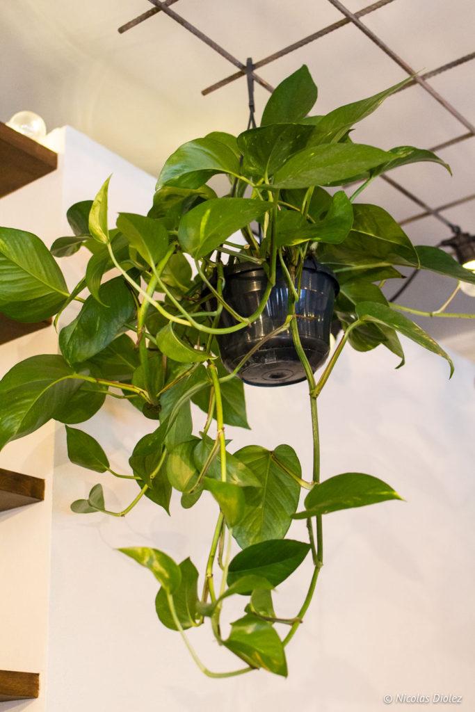 plante Positive Café Versailles