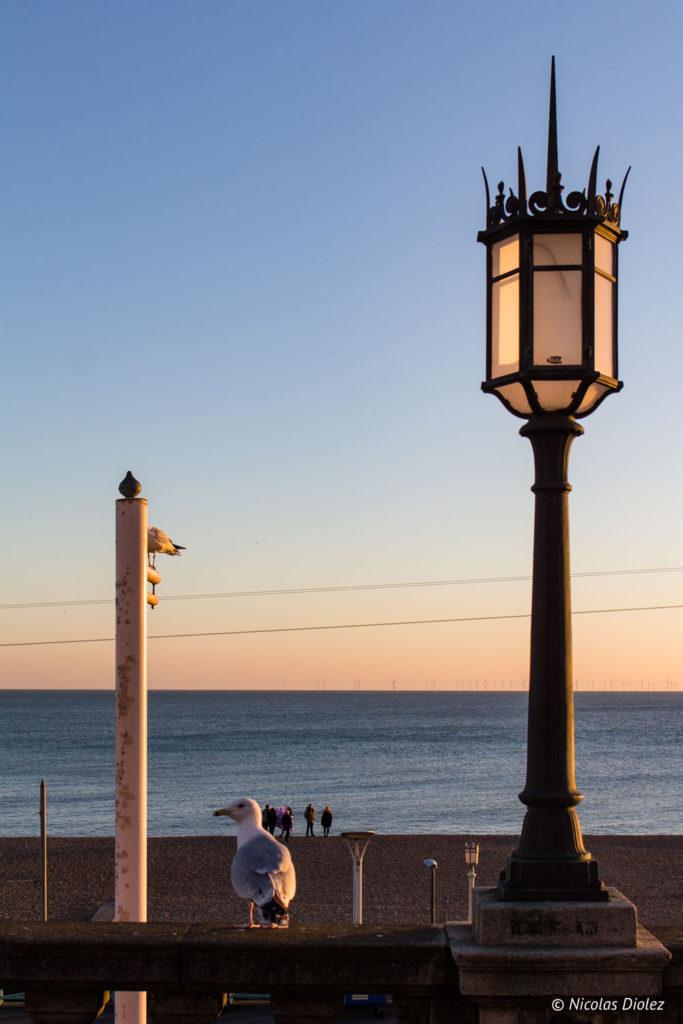 lampadaire et mouette plage Brighton