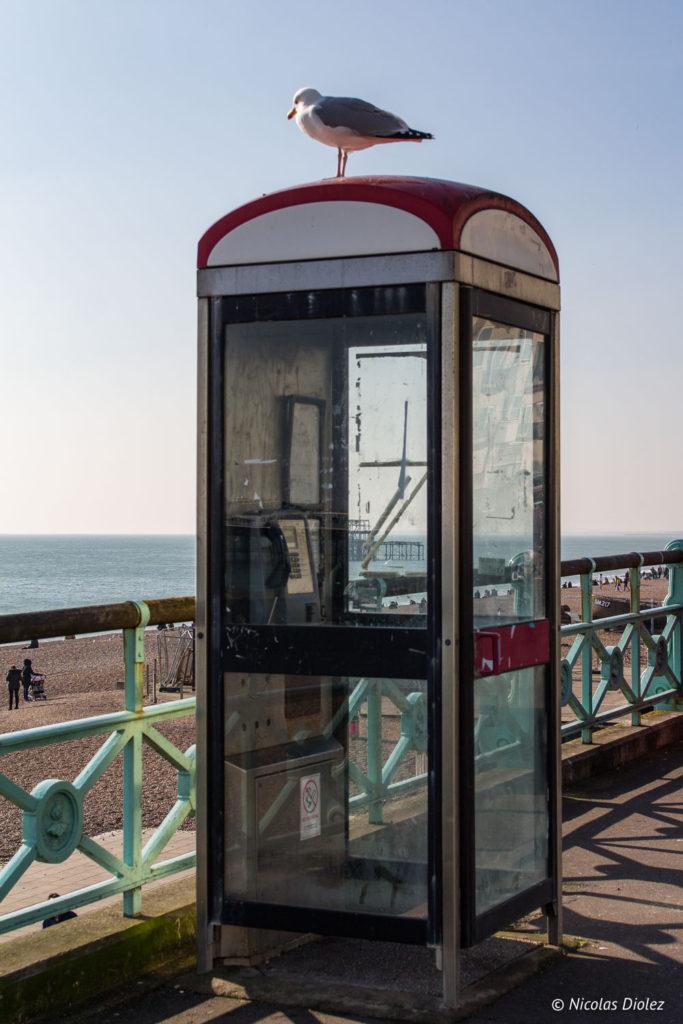 mouette sur cabine téléphonique plage Brighton
