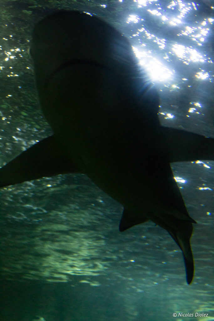 requin Aquarium Sealife Brighton