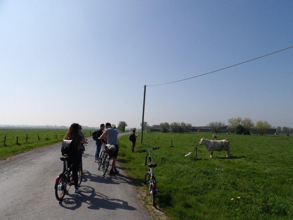 La Normandie à vélo champ vache