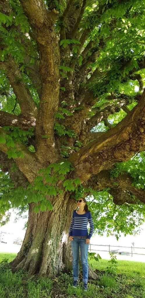 arbre Domaine Antoine Marois Cambremer
