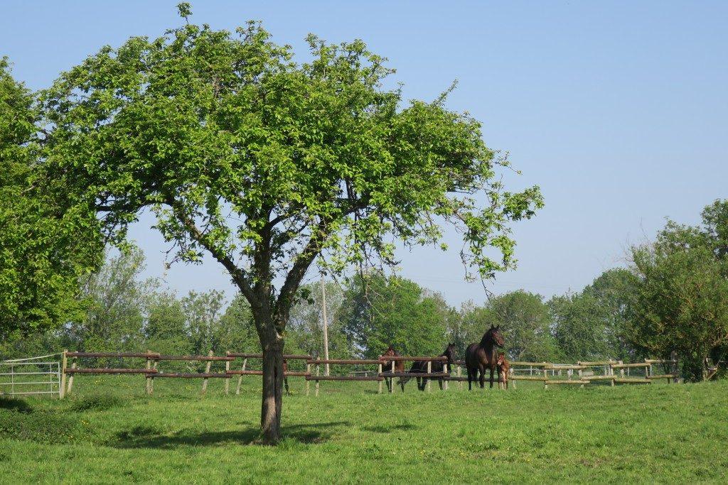 chevaux Domaine Antoine Marois Cambremer