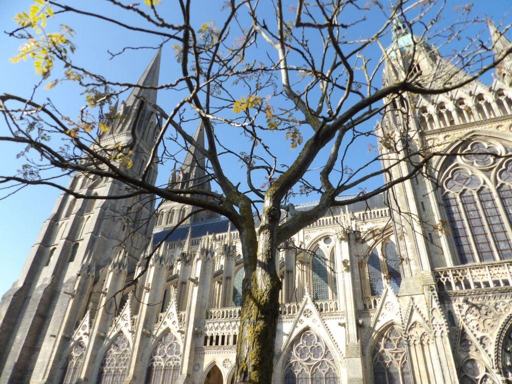 arbre et Cathédrale de Bayeux Calvados