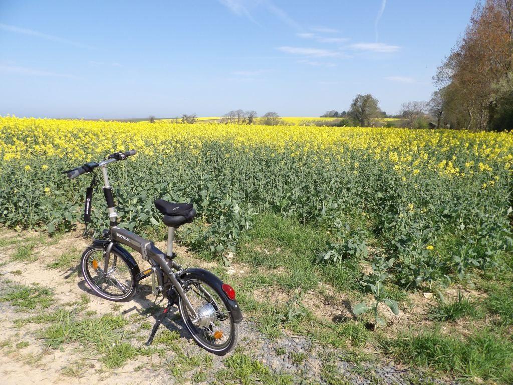 vélo champ Colza Calvados