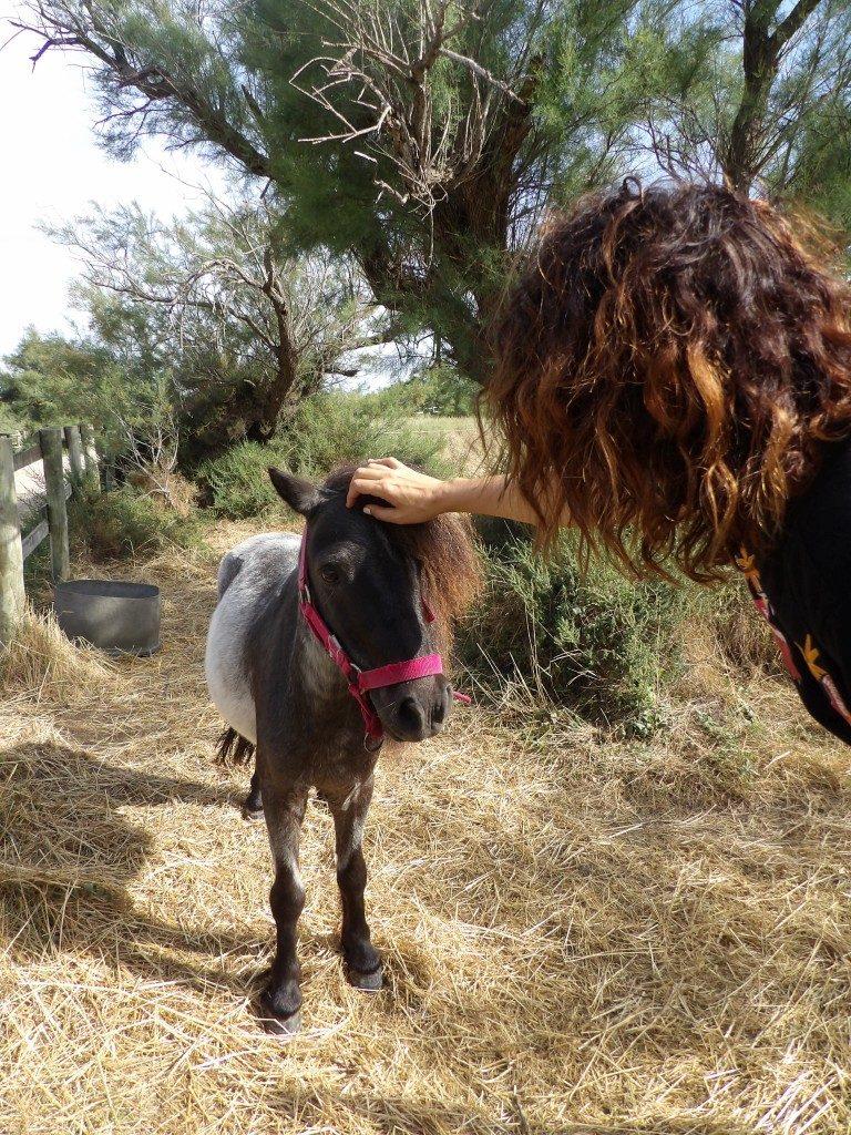 poney domaine de la Palissade Camargue