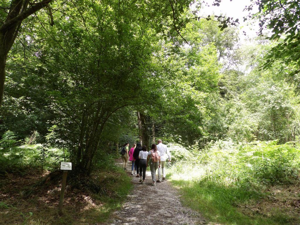 balade forêt Bagnoles de l'Orne