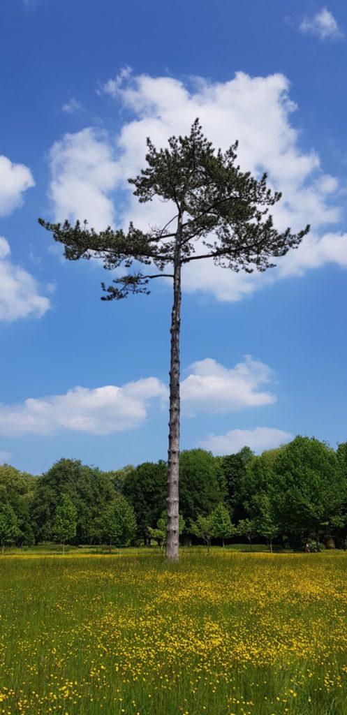 Domaine de Chantilly - DR Melle Bon Plan 2018