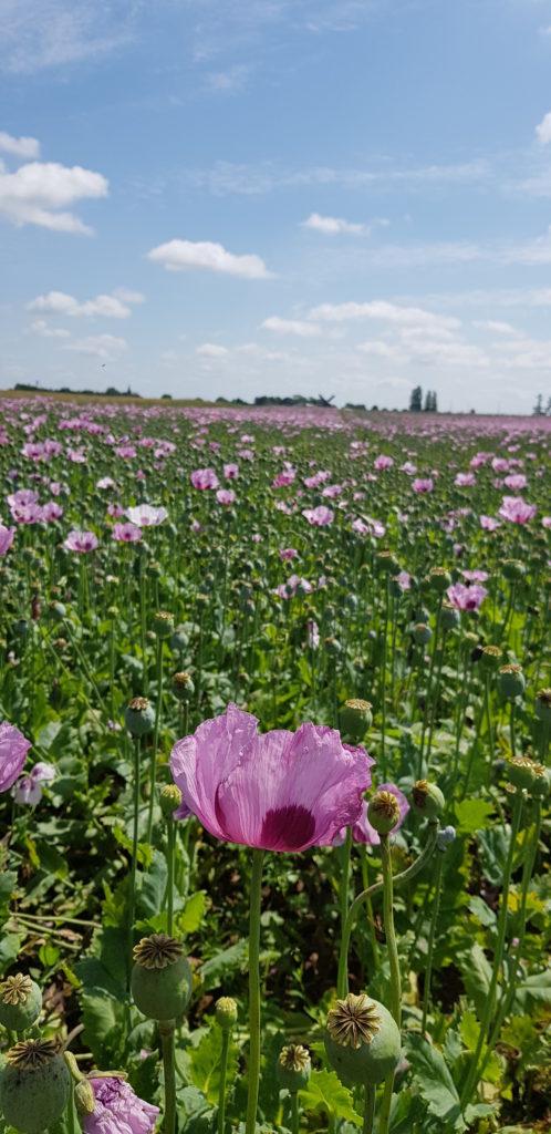 Champs Tulipes Eure et Loir - DR Melle Bon Plan 2018