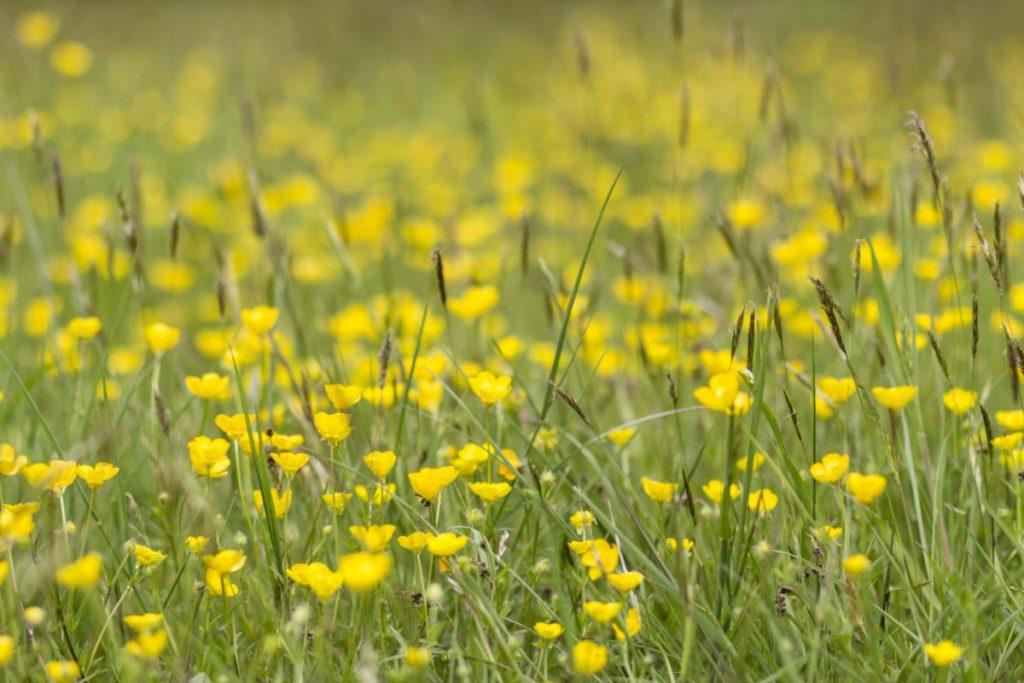 fleurs Domaine de Chantilly