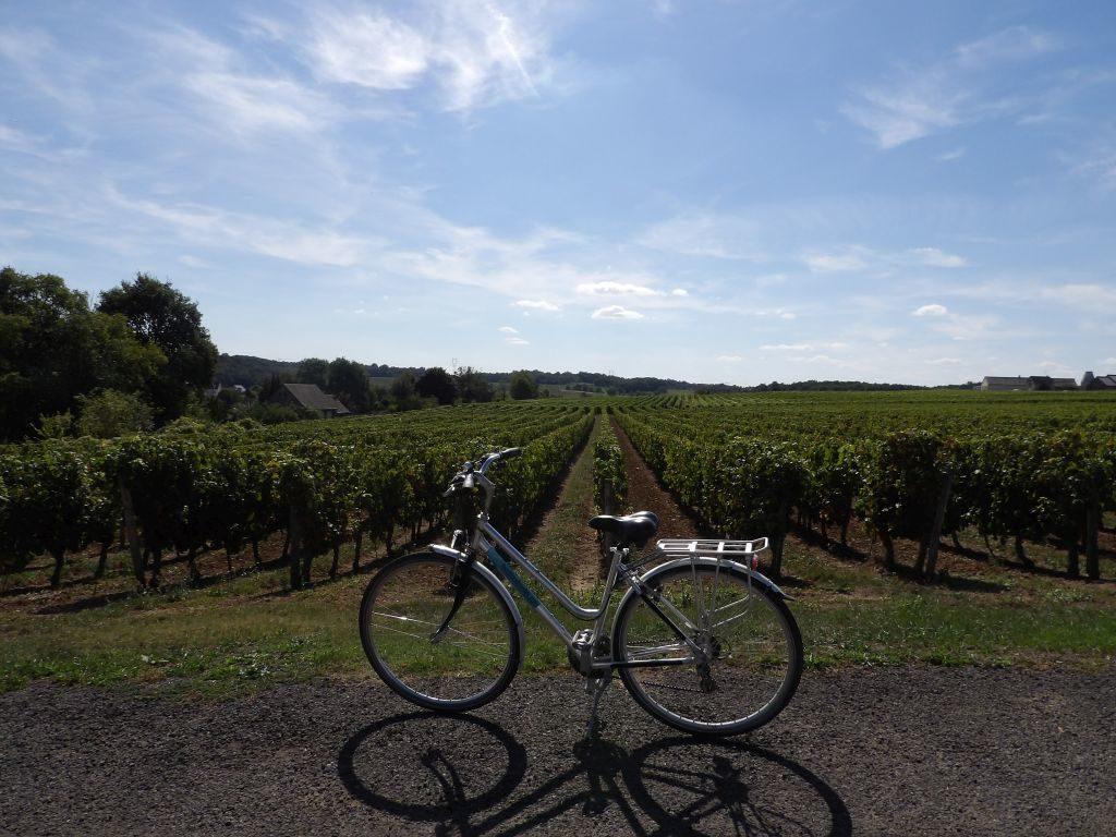 Balade à vélo Saumurois vignes