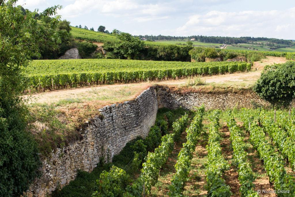vignes Ecole des Vins de Bourgogne Beaune