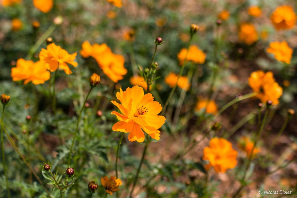 fleurs Jardins Suspendus de Cohons
