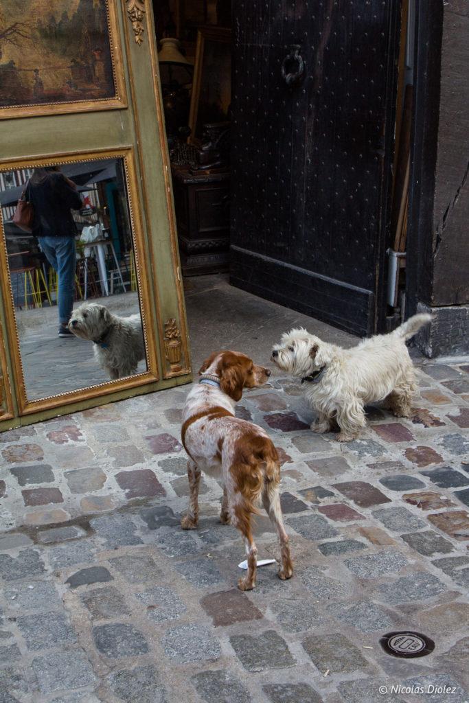 chiens Rouen