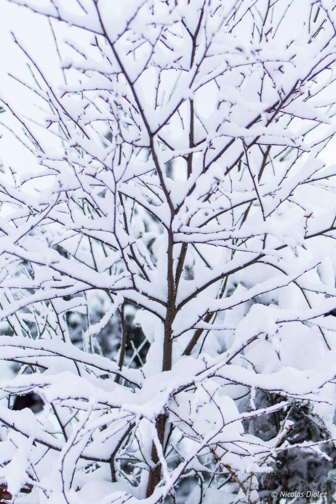 arbre neige Saint-Lary Pyrénées