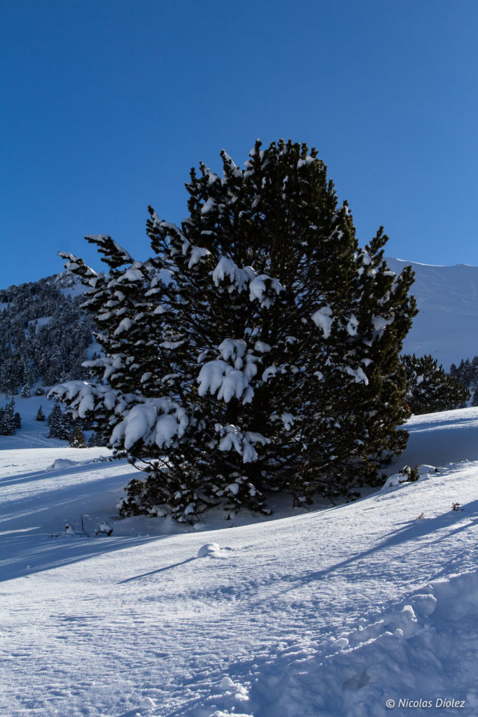 Montagne Saint-Lary Pyrénées