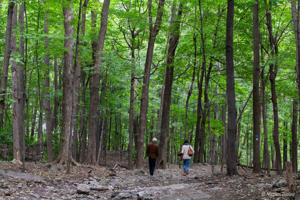 forêt Montréal Mont Royal