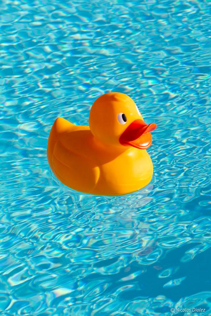 canard piscine Nhow Marseille