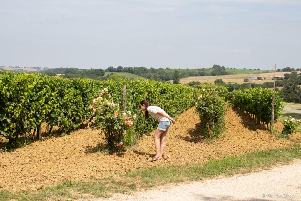vignes Domaine Grand Comté Gers