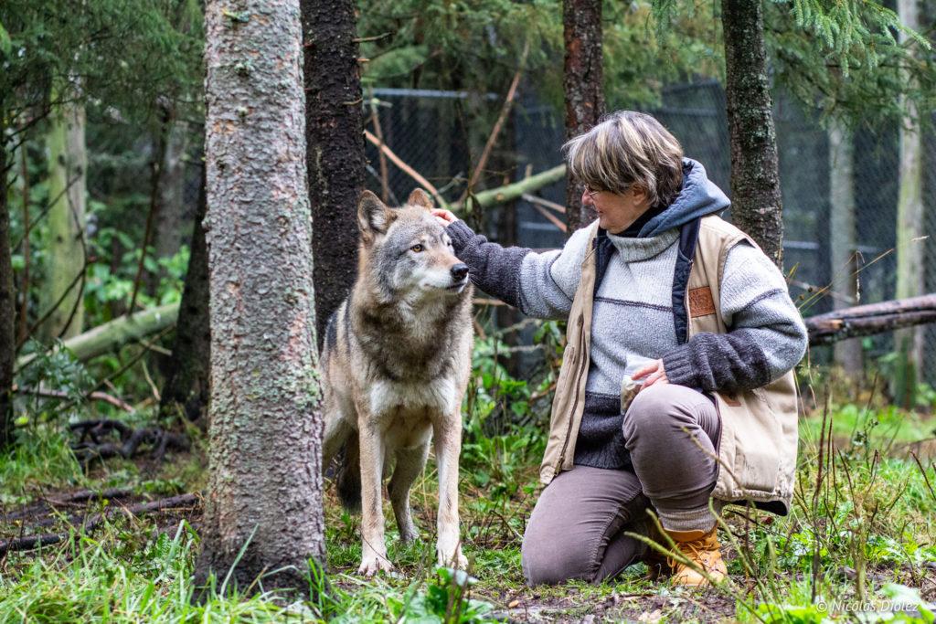 loup Refuge Pageau Abitibi Témiscamingue Québec