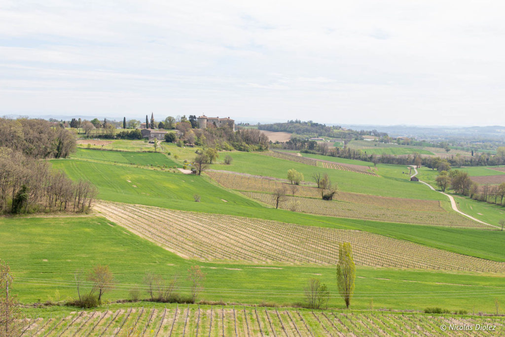 vignes Château de Salettes Tarn